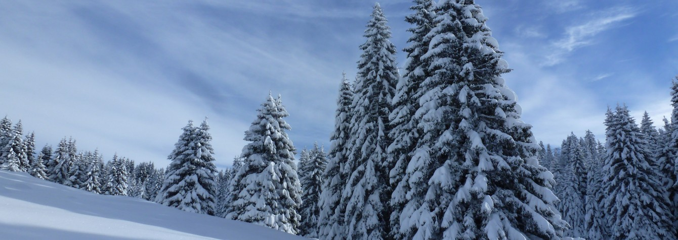 La Rosière - Fôret hiver - Florence Gaide